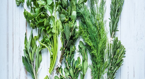 7 Low Oxalate Greens You Can Use Frequently - Oxalate Radar