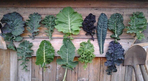 is kale high in oxalate
